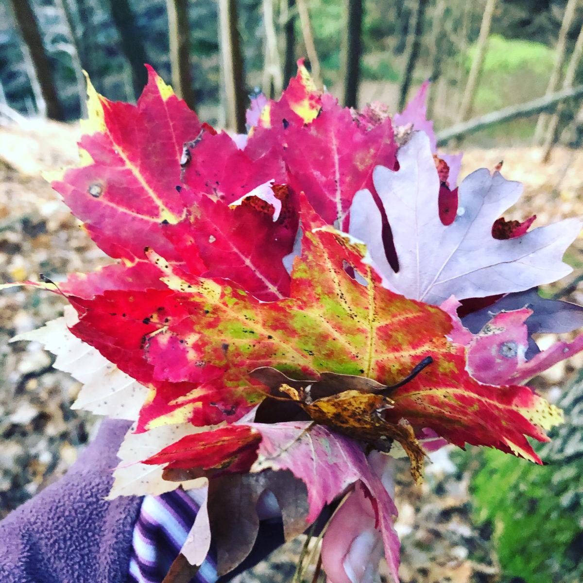 A bouquet of fallen fall leaves