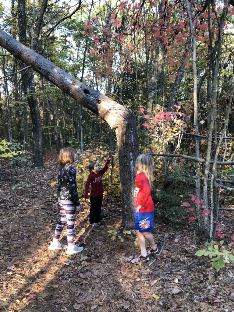 Rayleigh, Ainsley, and Dillon discussing a broken tree from a tornado.