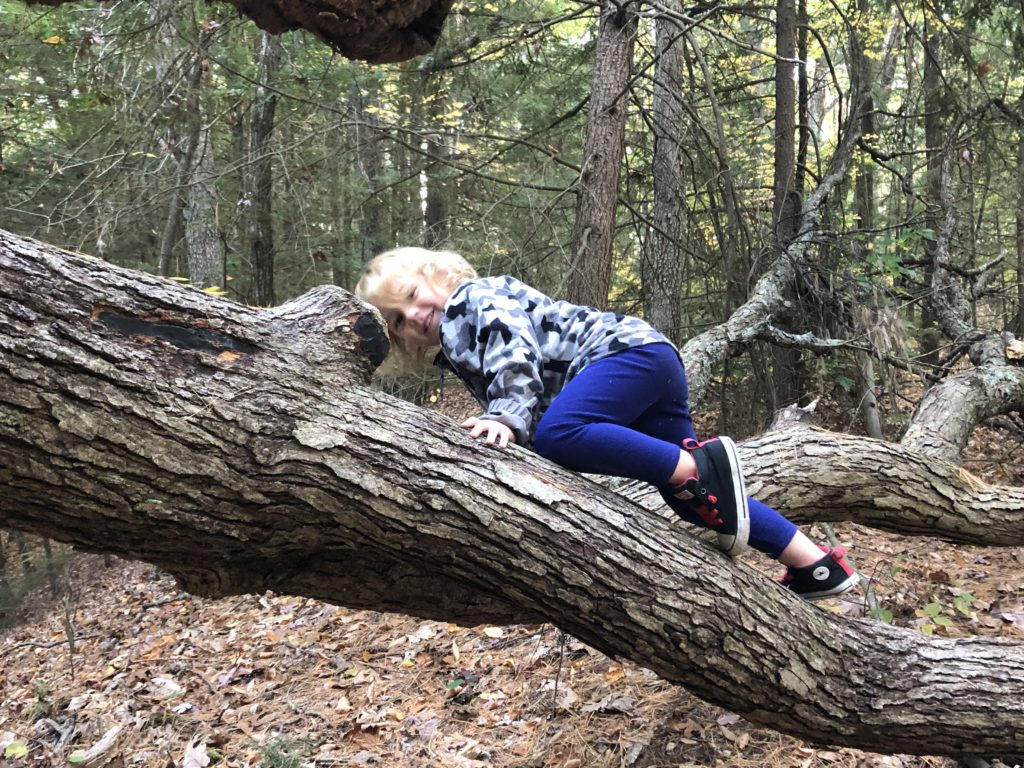 Grayson exploring a downed Oak tree.